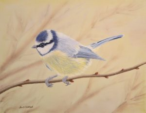 For sale, Blue Tit (Limited edition print)