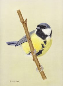 For sale, Great Tit (Limited edition print)
