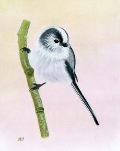For sale, Long Tailed Tit (Limited edition print)