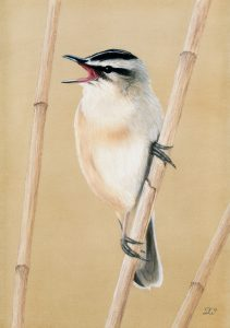 For sale, Sedge Warbler (Limited edition print)